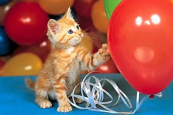 Совет 2: стоит ли покупать заранее воздушные шары